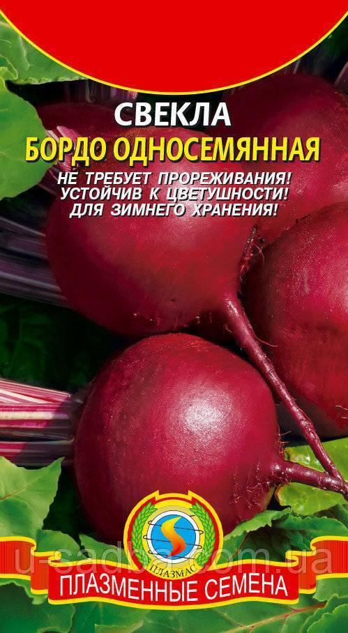 Выращивание свеклы в сибири и на урале: советы садоводов и описание лучших сортов для открытого грунта