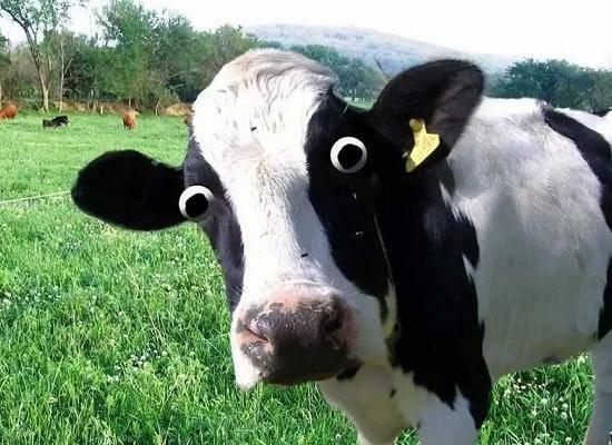 Крупный рогатый скот это какие животные