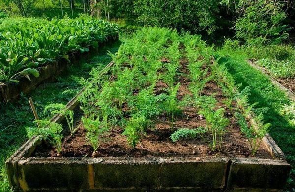 Земля под морковь: как определить тип почвы для правильной подготовки грядки к посадке, какой грунт любит овощ и что сделать, чтобы не совершить ошибок?