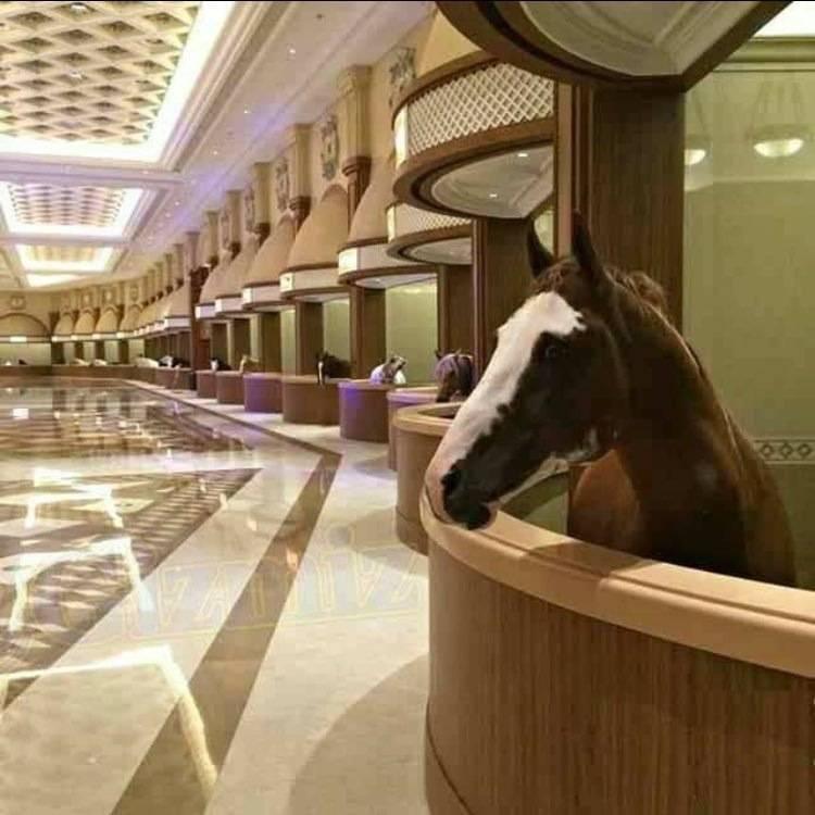 Конюшня для лошадей: проектирование и строительство своими руками