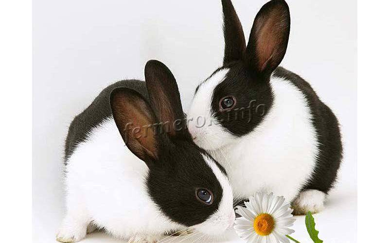 Спрей от ушного клеща для кроликов