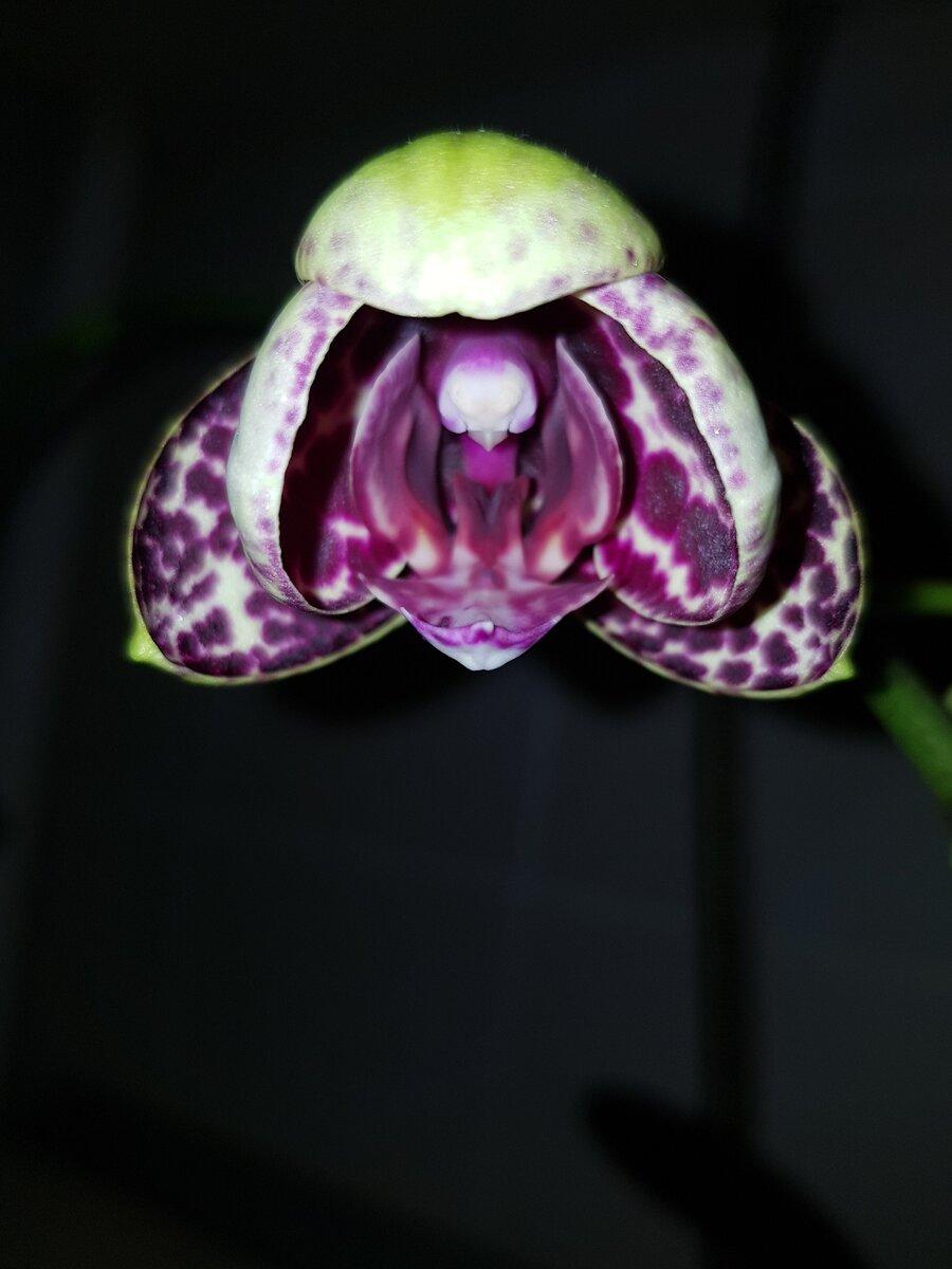 Почему не цветет фуксия — неправильный уход или внешние факторы