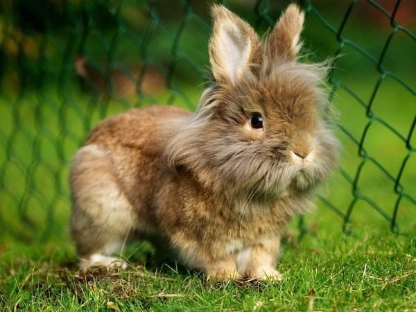 Декоративные кролики: как правильно ухаживать и содержать в домашних условиях, как кормить