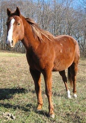 Все о подковах и ковке лошадей. зачем же нужно подковывать лошадей
