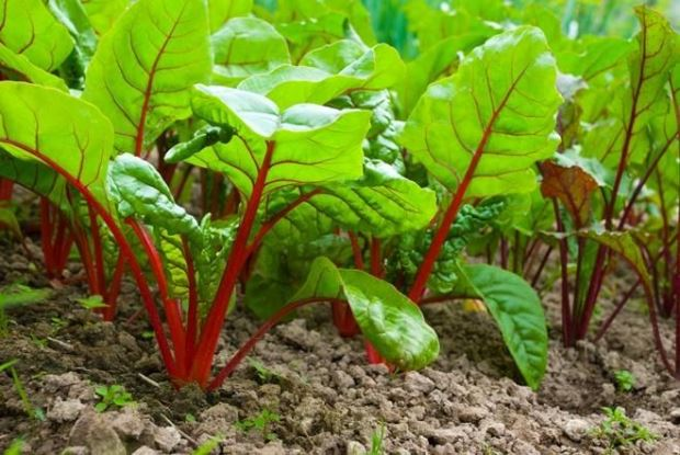 Можно ли садить морковь после свеклы