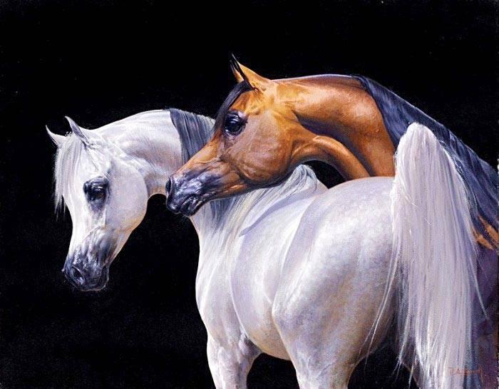 Арабская порода лошадей: история, типы и фото
