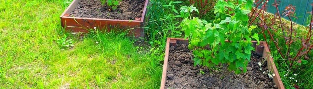 Можно ли сажать капусту в тени