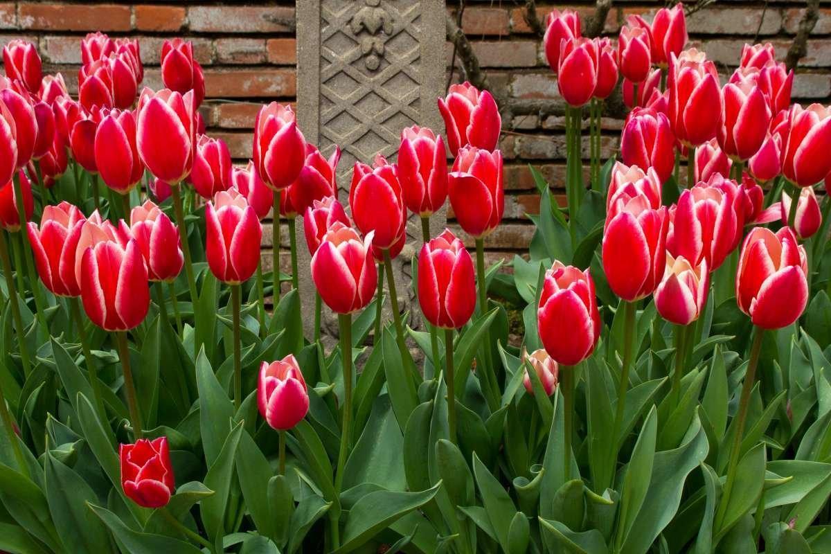 расписании фото с тюльпанами назвать потом научил