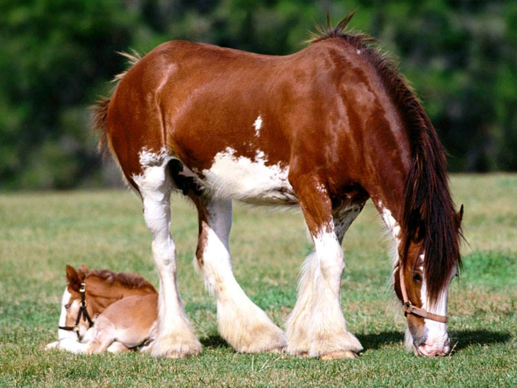 Сонник молоко лошади. к чему снится молоко лошади видеть во сне - сонник дома солнца