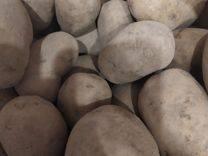 Картофель лилея: характеристика и особенности выращивания сорта