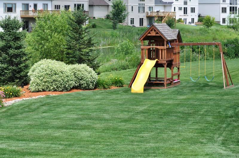 Сеянный газон: как выбрать газонную траву и какой из сортов самый лучший?