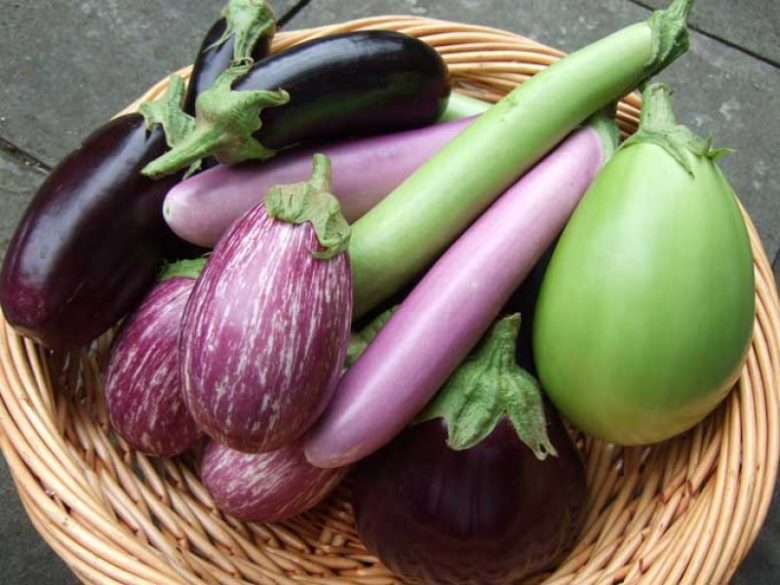 Выращивание рассады: почва, семена, подкормка, посадка - правила по растениям