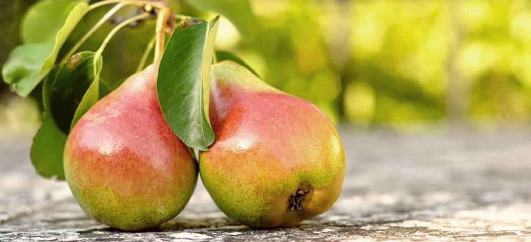 Подкормка плодовых деревьев: как и чем правильно удобрять плодовые деревья?
