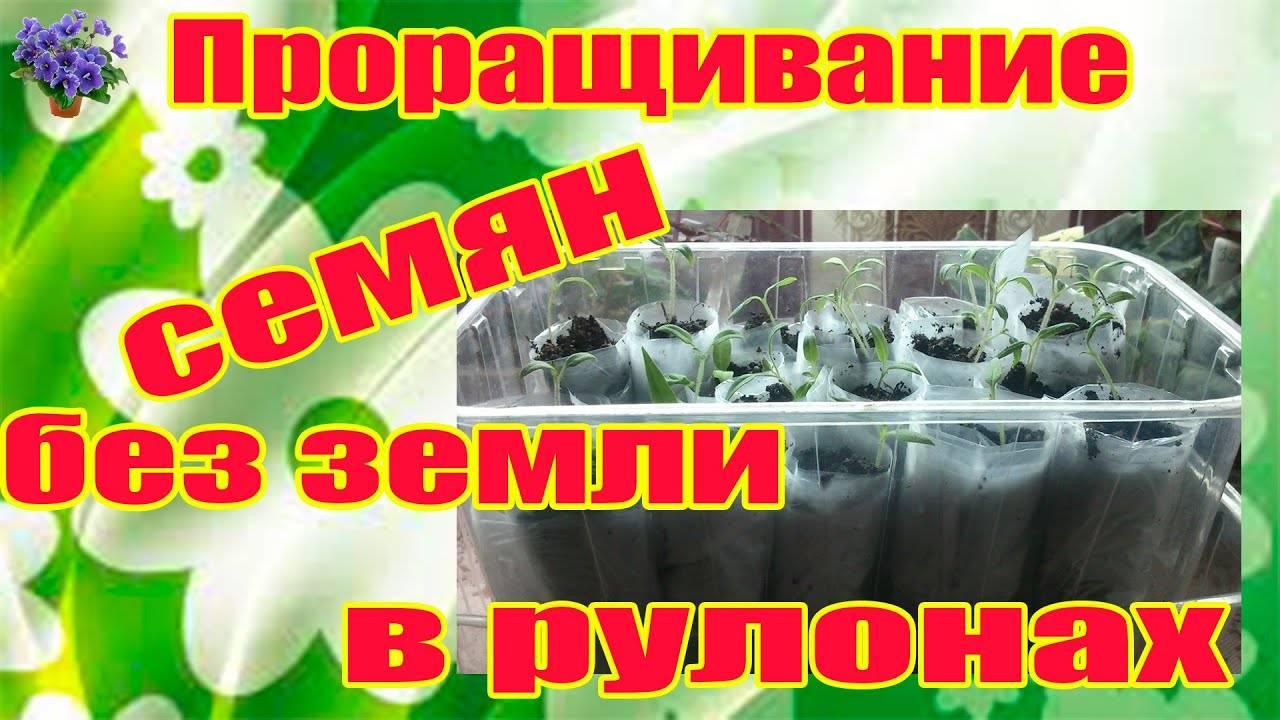 Вырастить рассаду огурцов без земли способом самокрутка