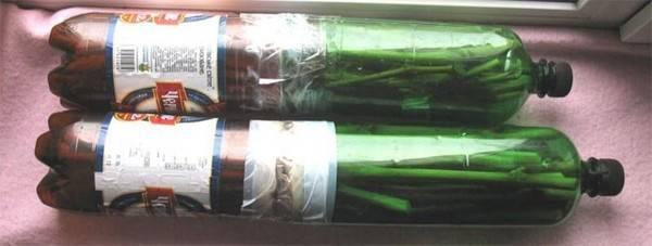 Заготовка, укоренение и проращивание черенков винограда в домашних условиях